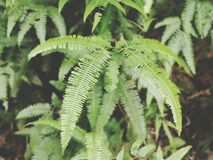 Fern. At bushes Stock Photo