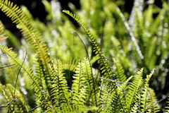 Fern bushes. In the forest Stock Images