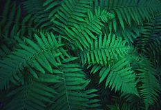 Fern bushes grow in the forest royalty free stock images