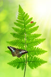 Fern with butterfly Royalty Free Stock Image
