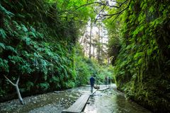 Free Fern Canyon Royalty Free Stock Photography - 162467547