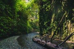 Fern Canyon, Californië, de V.S. Stock Foto