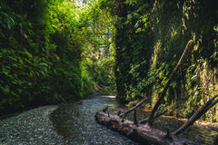 Fern Canyon, California, USA. Stock Photo
