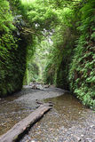 Fern Canyon Royalty Free Stock Photography