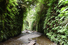 Fern Canyon Royalty Free Stock Image