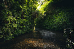 Fern Canyon Kalifornien, USA Arkivfoto