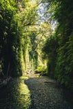 Fern Canyon, la Californie, Etats-Unis Photographie stock libre de droits