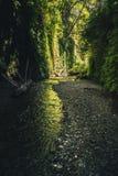 Fern Canyon, la Californie, Etats-Unis Photographie stock
