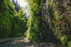 Fern Canyon, la Californie, Etats-Unis Photo stock
