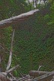 Fern Canyon med stupade träd Arkivbilder