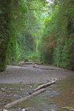 Fern Canyon. In Prairie Creek Redwoods State Park CA Stock Photography