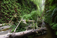 Fern Canyon Royalty Free Stock Photos