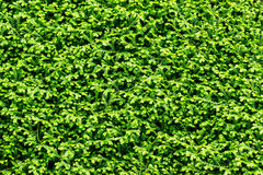 Fern carpet Royalty Free Stock Images