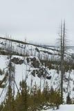 Fern Cascades Loop Trail, Winter, Yellowstone NP Royalty Free Stock Photo