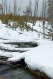 Fern Cascades Loop Trail, Winter, Yellowstone NP Royalty Free Stock Photos