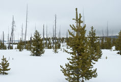 Fern Cascades Loop Trail, Winter, Yellowstone NP Stock Photography