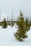 Fern Cascades Loop Trail, Winter, Yellowstone NP Stock Photos