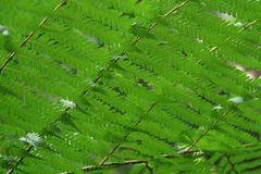 Fern Ceiling Royalty Free Stock Photos