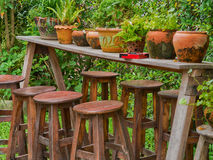 Fern in clay pots on Wooden table, in the garden. royalty free stock photography