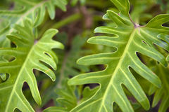 Fern Close Up Stock Photo