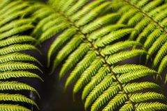Fern close up - detailed green plant foliage royalty free stock photos