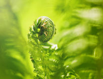Fern close up Royalty Free Stock Images