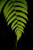 Fern Closeup Imagen de archivo libre de regalías