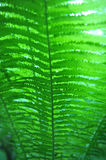 Fern Closeup. Green fern shot from low angle.  Soft focus with abstract touch.  Vertical image Stock Image