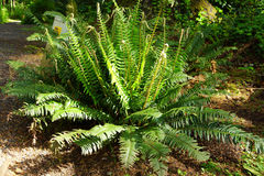 Fern on coastal forest floor Stock Photos