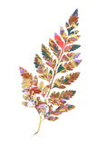 Fern Composing with Abstract. A leaf of fern composed with an Abstract painting Royalty Free Stock Photo