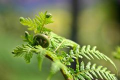 Fern Curls Royalty Free Stock Images