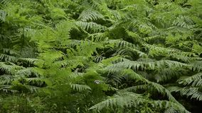 Fern dancing with the air. Lush tropical vegetation. Rainforest pattern stock footage