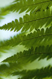 Fern on a dark background Stock Photos