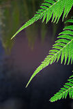 Fern deatail stock images