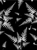 Fern decoration. Illustration of beautiful fern decoration Royalty Free Stock Photography