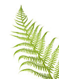 Fern detail Stock Images