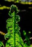 Fern detail. Beautiful fern in a forest stock image