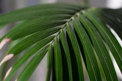 Fern Detail stock foto