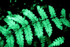 Fern detail Stock Photography