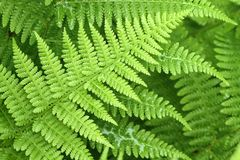 Fern detail Stock Photo