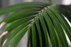 Fern Detail photo stock