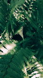 Fern. Detail of plant natural ferm in nature royalty free stock photography
