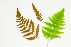 Fern details on white Royalty Free Stock Photo