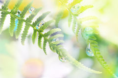 Fern with dew drops. With mirroring efect inside Stock Images