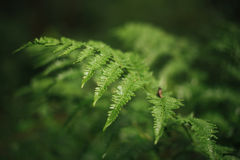Fern in the dew Stock Images