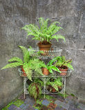 Fern Display Stock Images