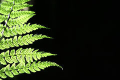 Fern with dots. A close up of a fern frond Royalty Free Stock Image