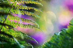 Fern from the fairy story Royalty Free Stock Image