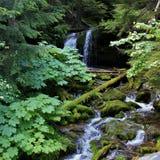 Fern Falls Stockfoto