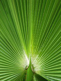 Fern Fan. Green fern fan stock photo